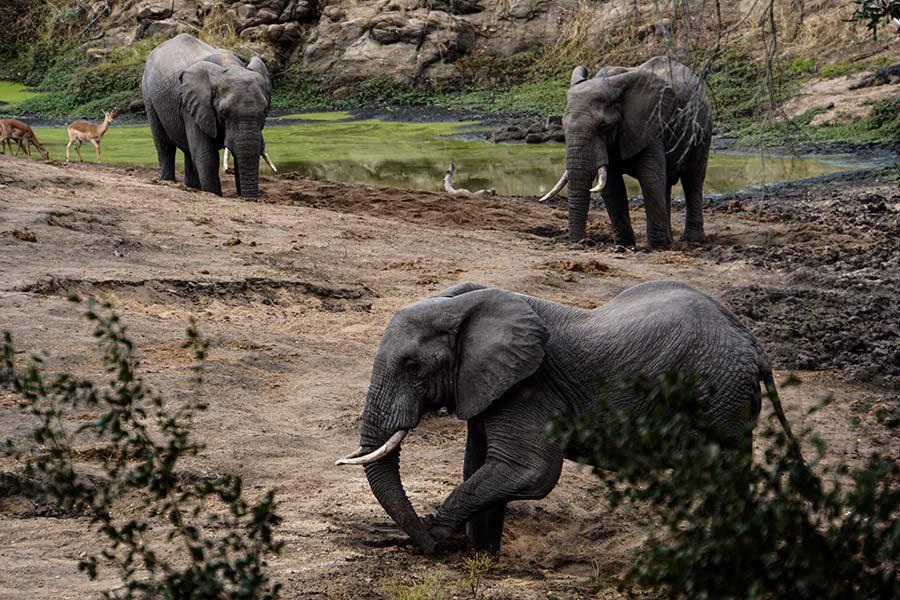 Elefanten (© Matthias Holtmann/Sabine Scho)